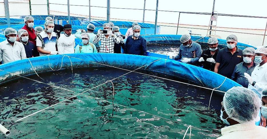 বায়োফ্লক মাছ চাষ পদ্ধতি